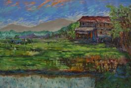 Myanmar Padi Field